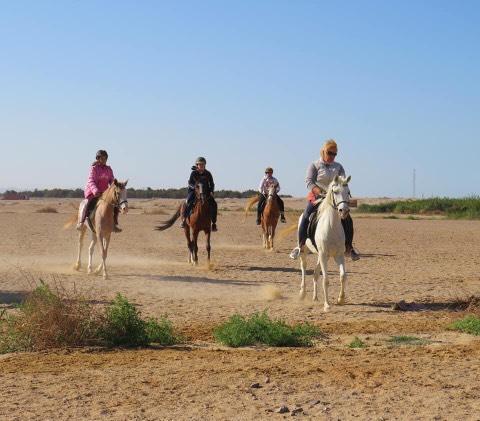 Călărie în deșert din Hurghada