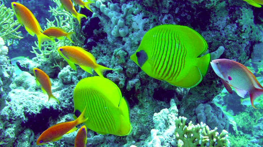 Fishing in Hurghada with dinner and transfer